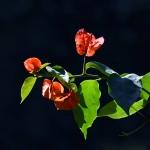 giardino_EI16036