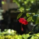 giardino_EI19386